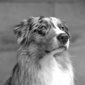 Hier würden Sie ein Bild von Hund Jamie sehen.